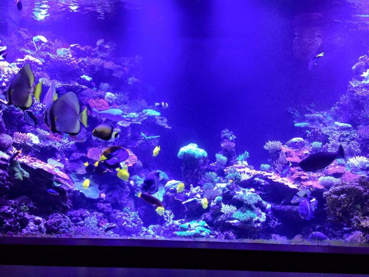 biggest home reef aquarium