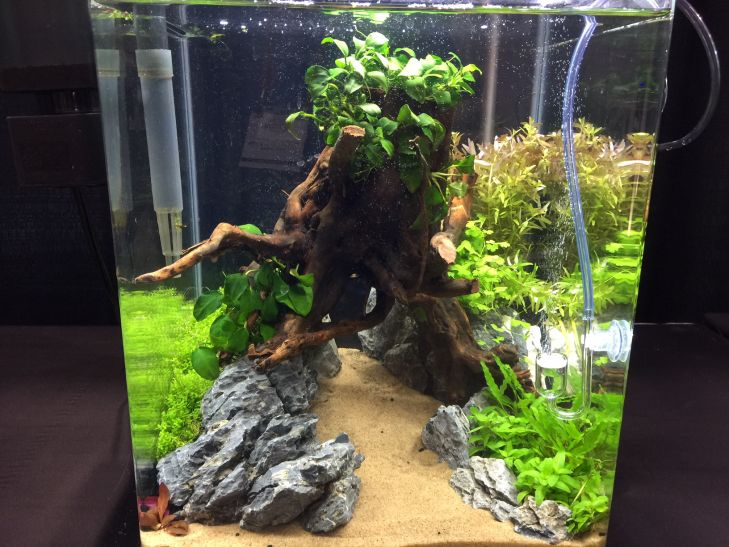 akvarium-aquascaping-contest (1)