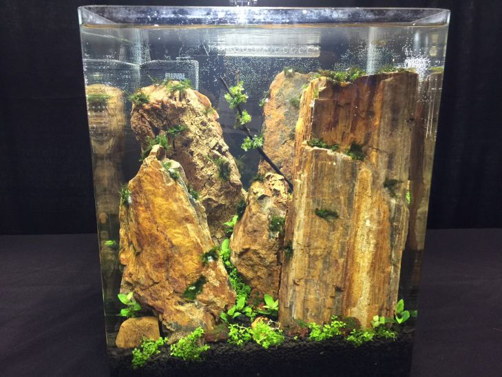 akvarium-aquascaping-contest (3)