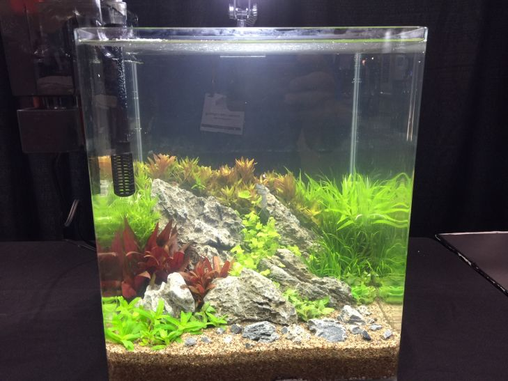 akuarium-aquascaping bertanding (4)