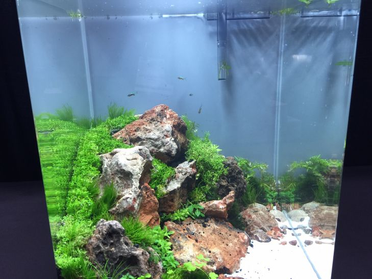 -aquascaping bertanding (2)