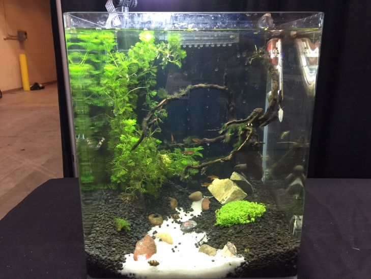 -aquascaping-contest (3)
