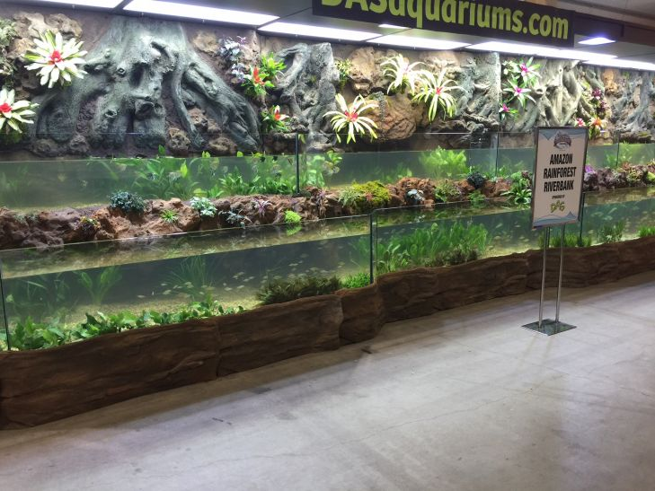 aquatic-experience-convention-planted-aquarium