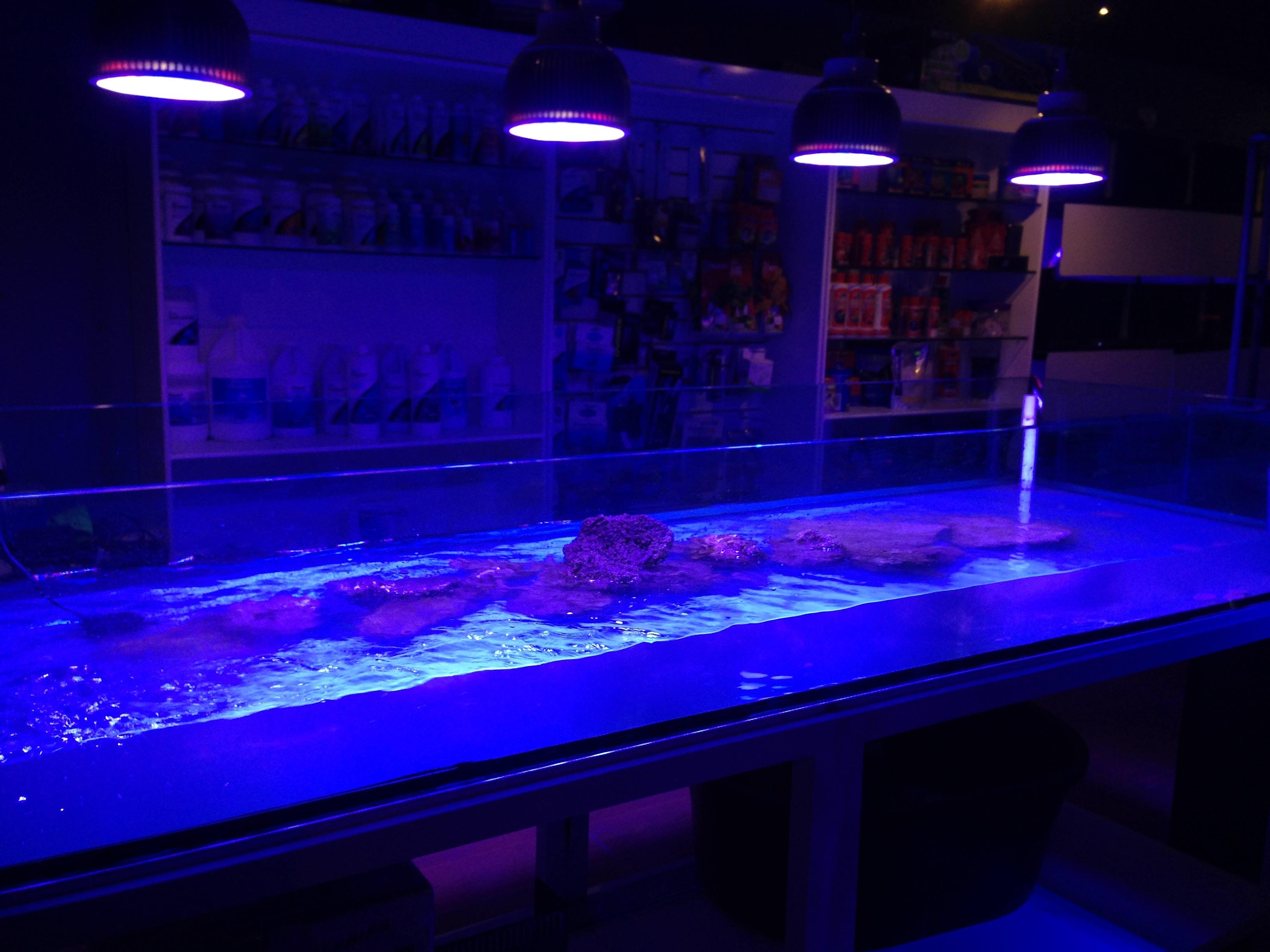 orphek led beleuchtung jetzt in mexiko erh ltlich aquarium led beleuchtung orphek. Black Bedroom Furniture Sets. Home Design Ideas