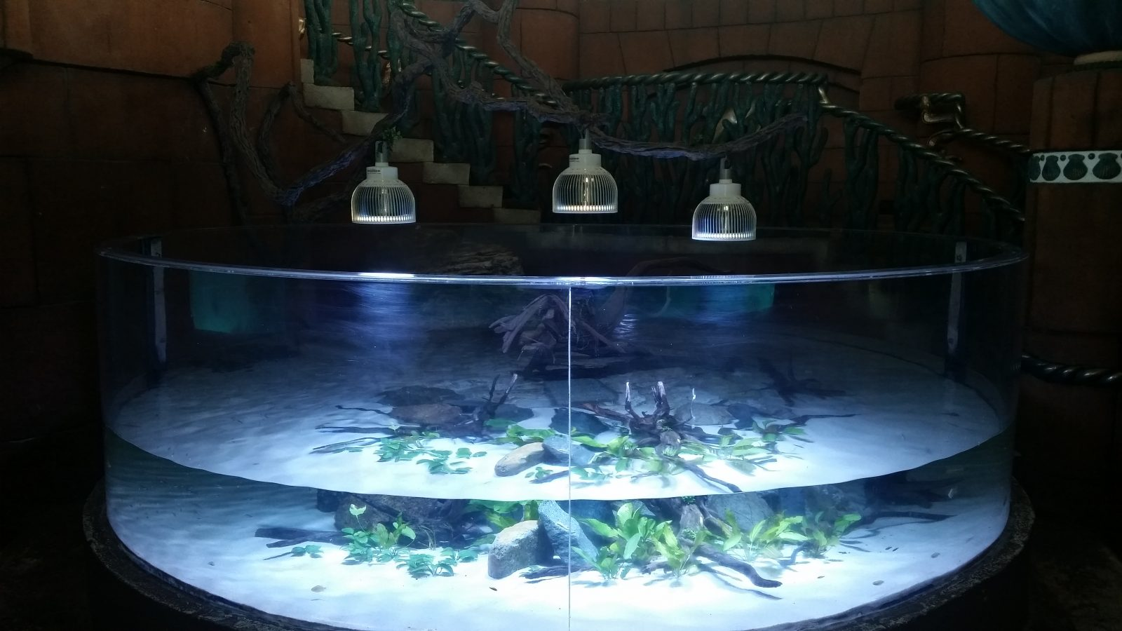 bermuda-hotel-Aquarium-LED-orphek
