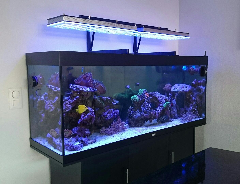 Elegant aquarium led id es de conception de table basse for Table basse aquarium
