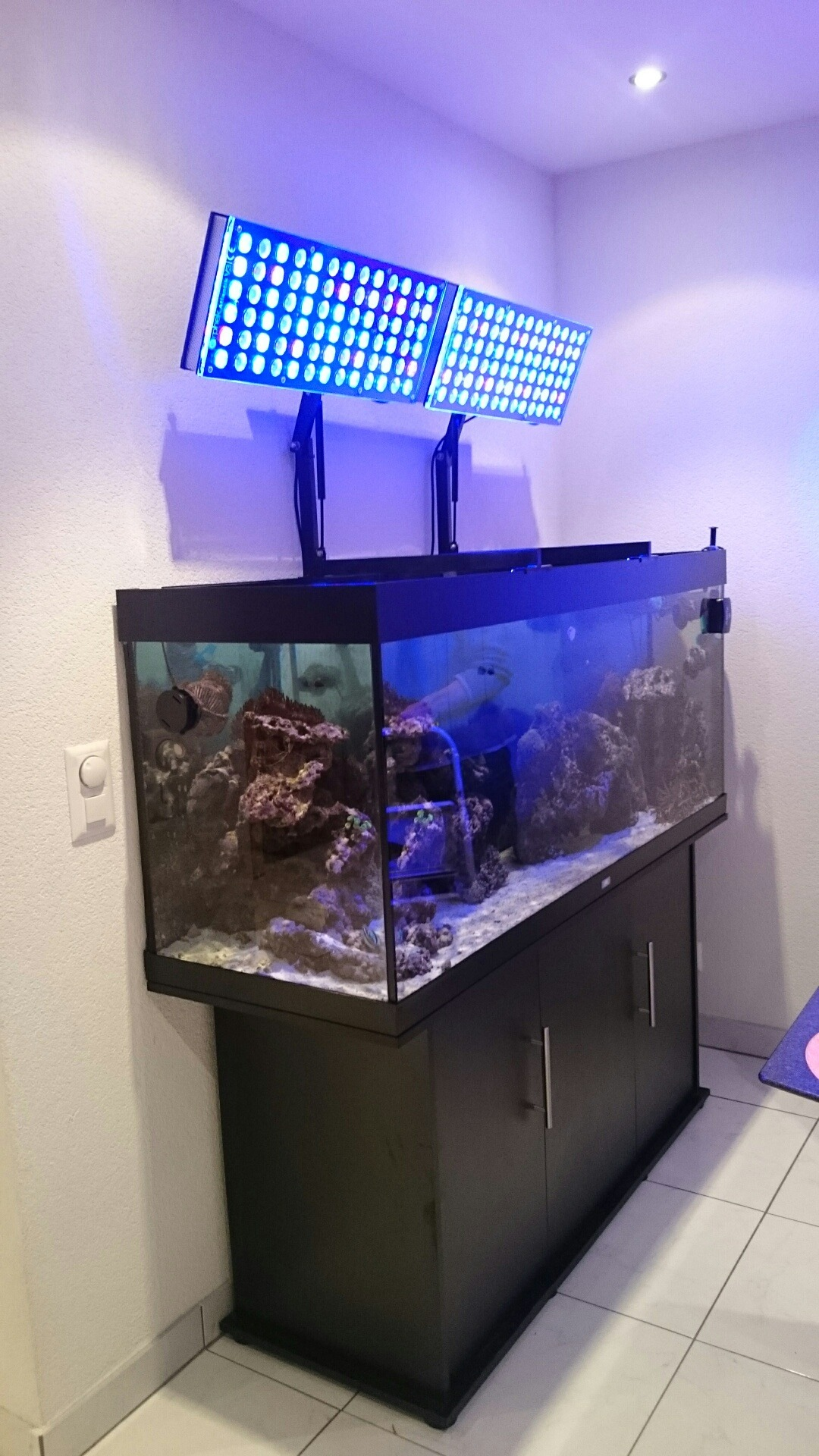 aquarium led licht montagearm aquarium led beleuchtung orphek. Black Bedroom Furniture Sets. Home Design Ideas
