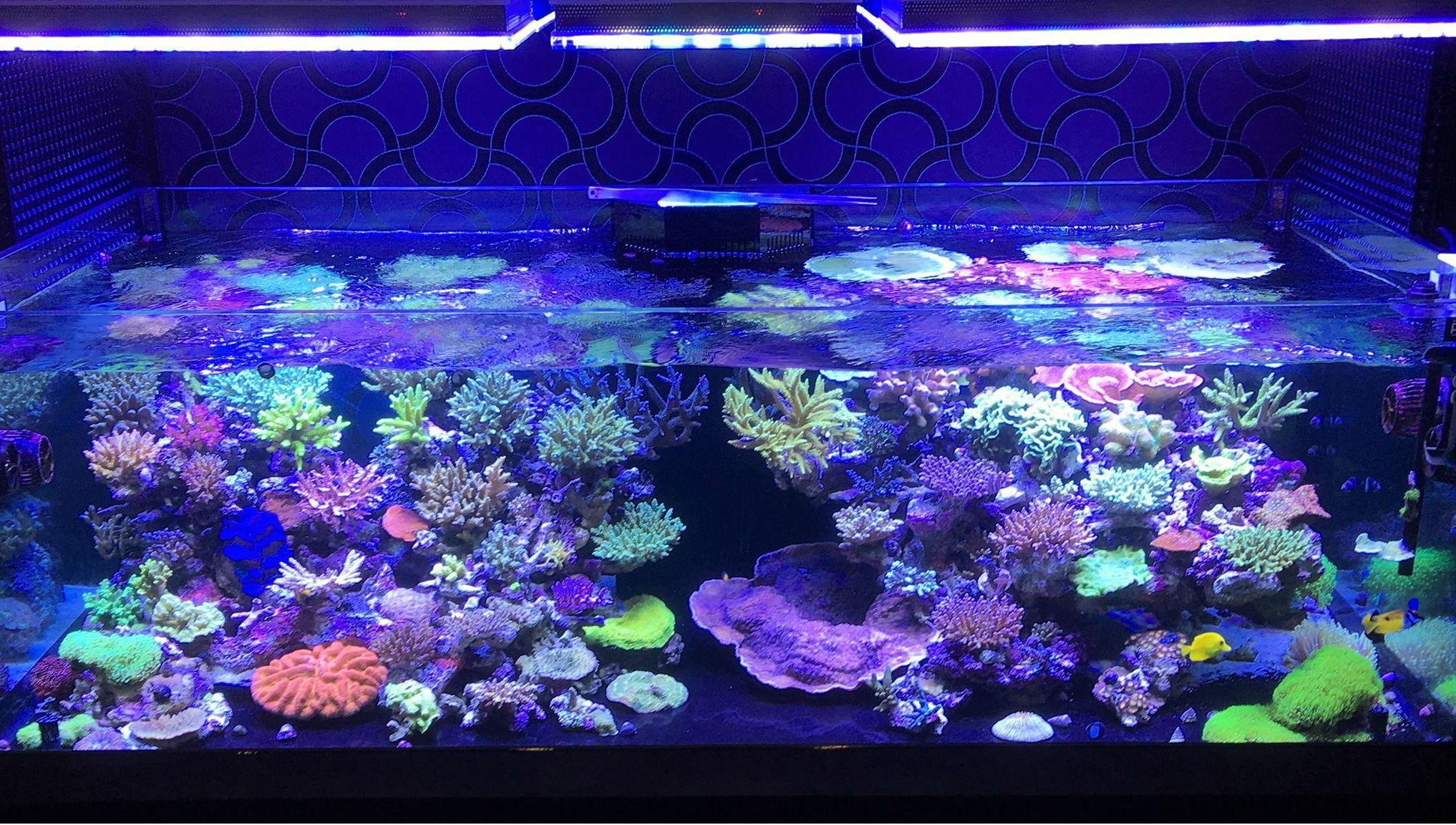 Best_reef_Aquarium_LED_lighting test