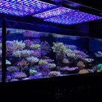 orphek_atlantik_v3plus_reef_aquarium_led_light
