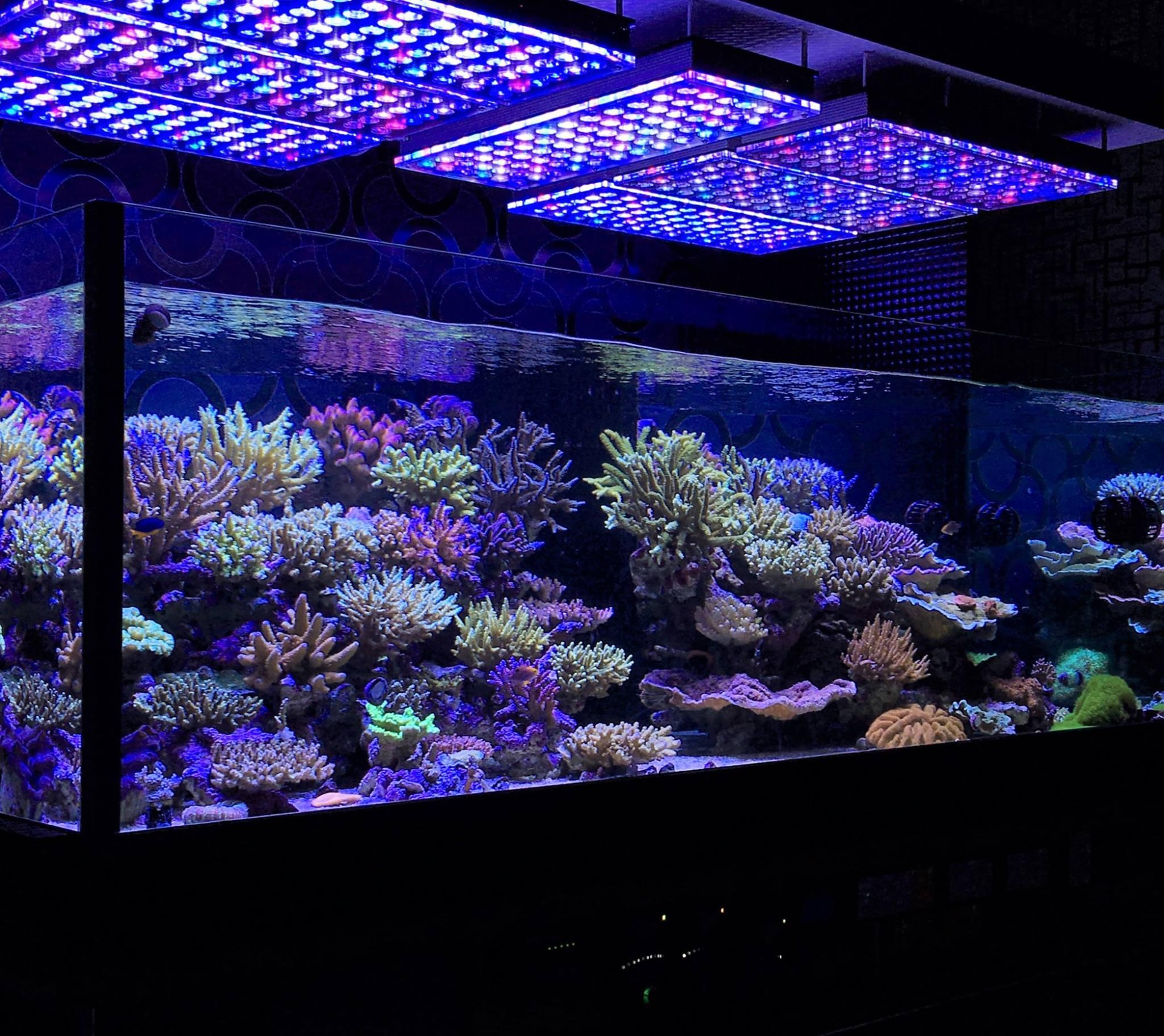Led aquarium clairage photos reef et planta galerie aquarium orphek - Eclairage led aquarium ...