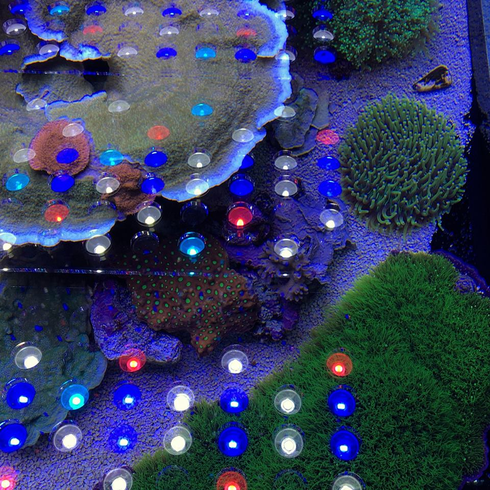 orphek_led_reef_coral_aquarium