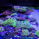 orphek_reef_aquarium_led_lighitng