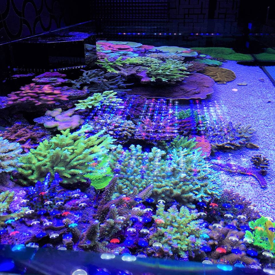 Aquarium Led Lighting Photos Reef And Planted Aquarium