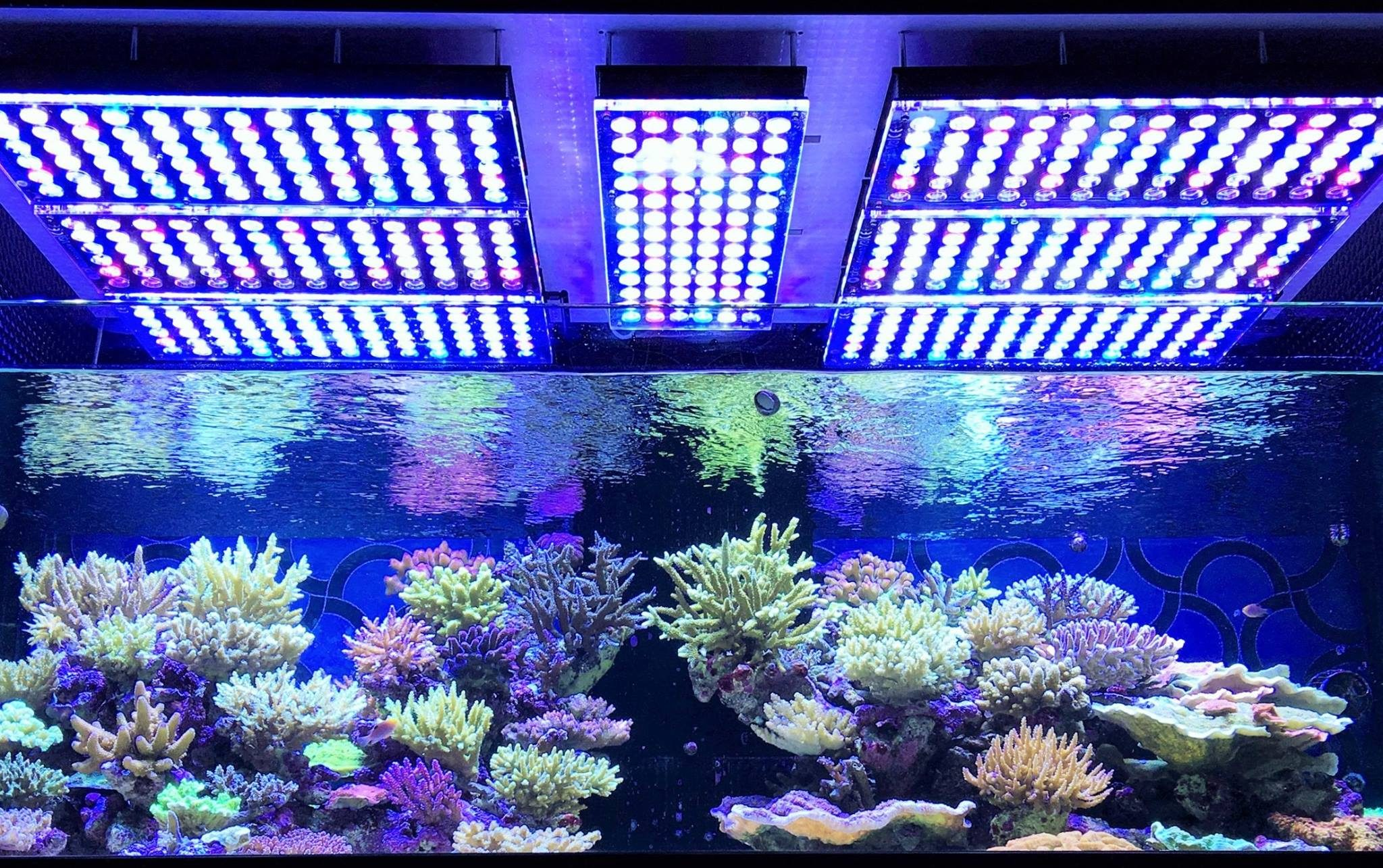 orphek-Atlantik-v3-plus-best-reef-light-coralv
