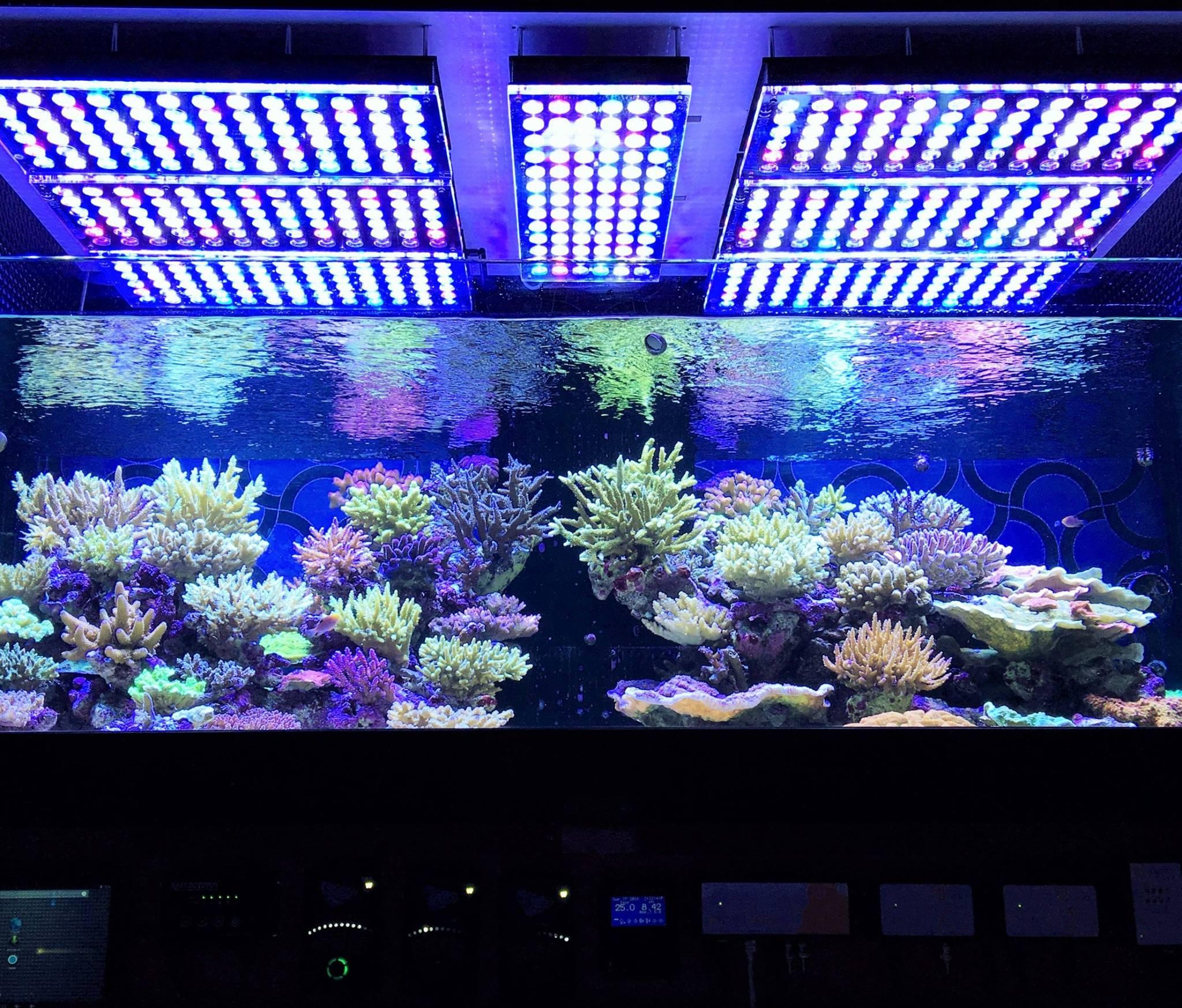 LED Aquarium éclairage Photos Reef Et Planta Galerie