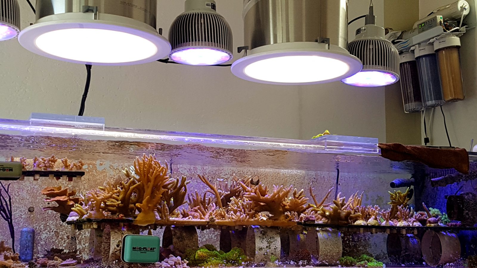coral_farm_led_lighting