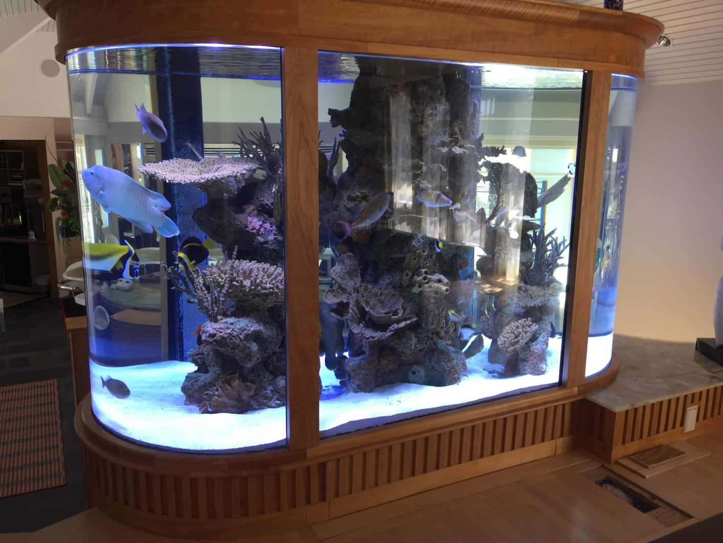 gorgeous-1500-gallon-bull-nose-aquarium