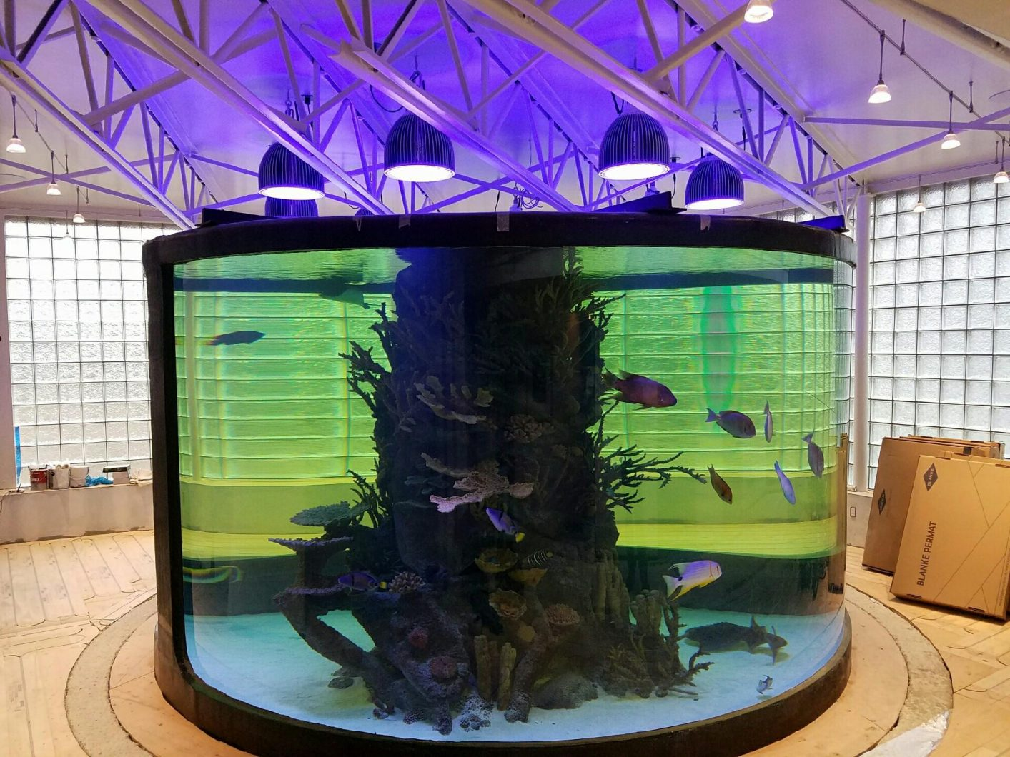 Éclairage d'aquarium à LED-Orphek