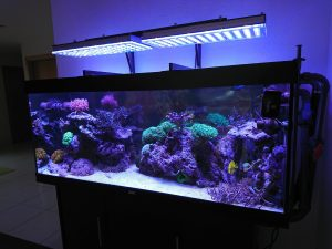 orphek-Swiss-Atlantik-V3-LED-light-reef-aquário