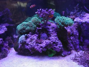 Atlantik-V3-LED-light-reef-aquário-orphek