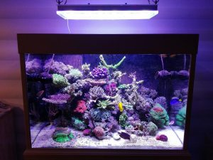 Beautiful tank display from Belgium under Orphek Atlantik