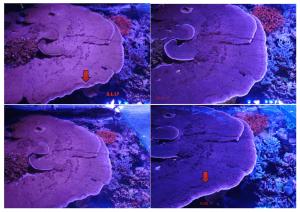 Atlantik V4 prototype Reef LED lighting makes science PART 2
