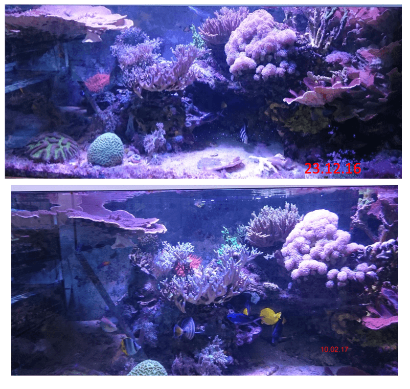 Coral-groei-color-reef-aquarium-Atlantik-v4