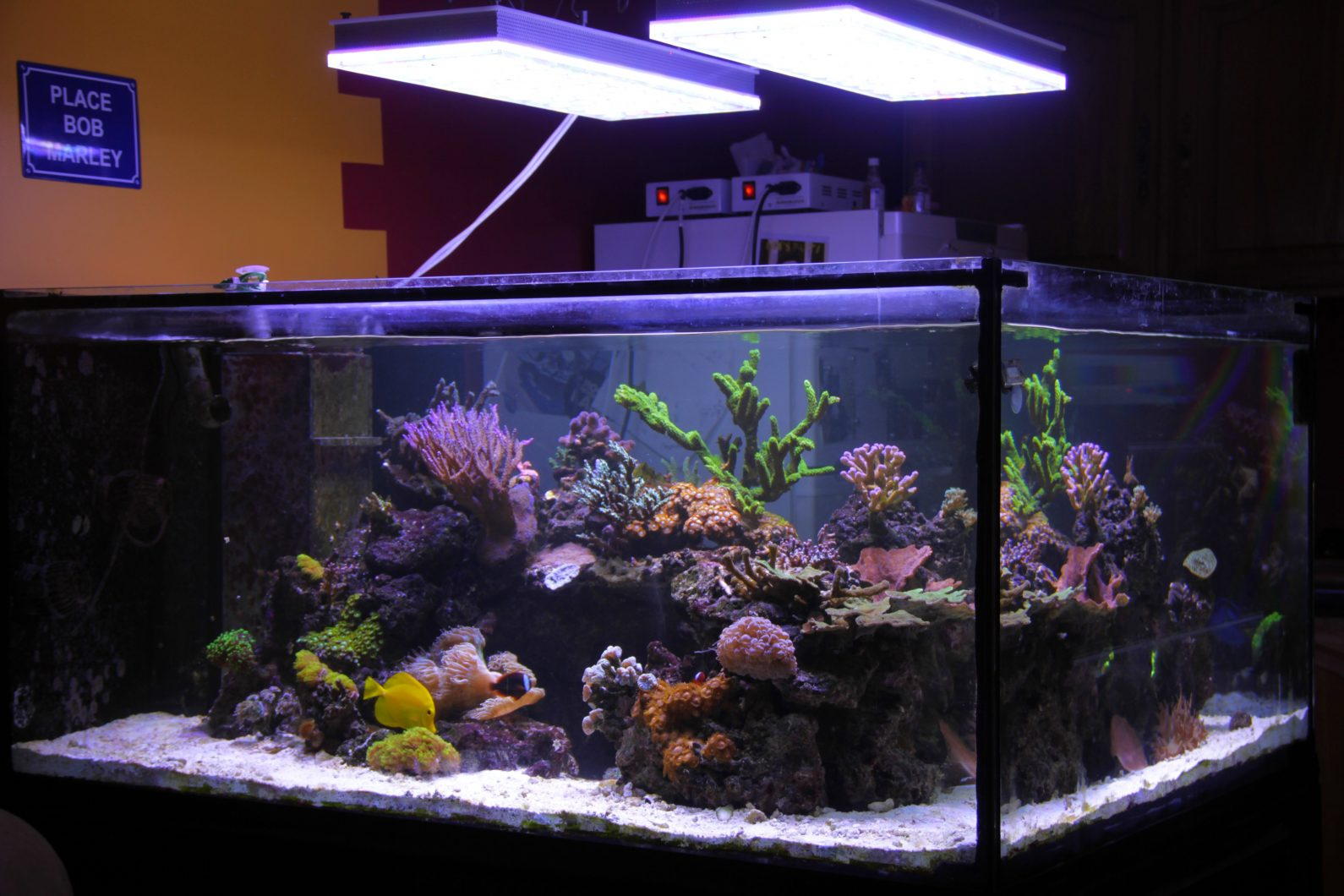 sps-reef-tank-led-light-fixtuer