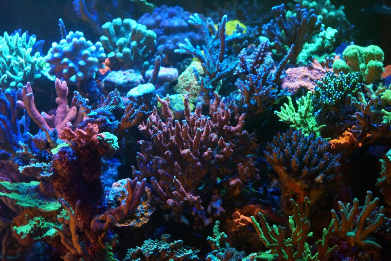 Coral_Growth_Color_Aquarium