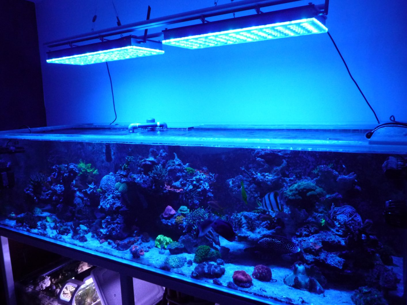 premiers-clients-tank-display-de-France-under-orphek-atlantik-v4
