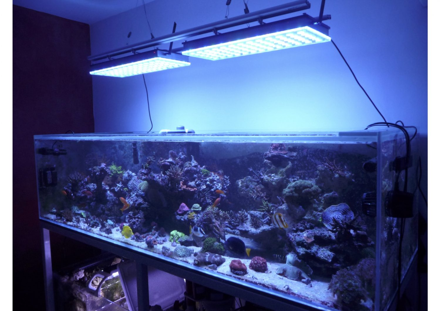 full_aquarium_photo_Atlantik_v4