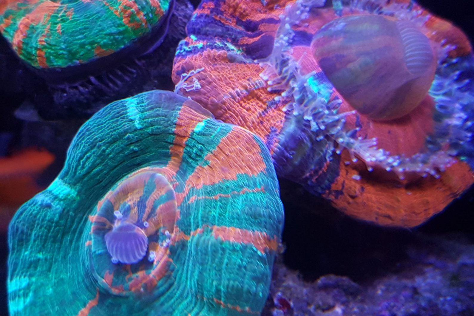 lps_coral_quarium_LED_ روشنی
