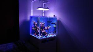Beautiful nano reef tank display from Greece under Atlantik Compact