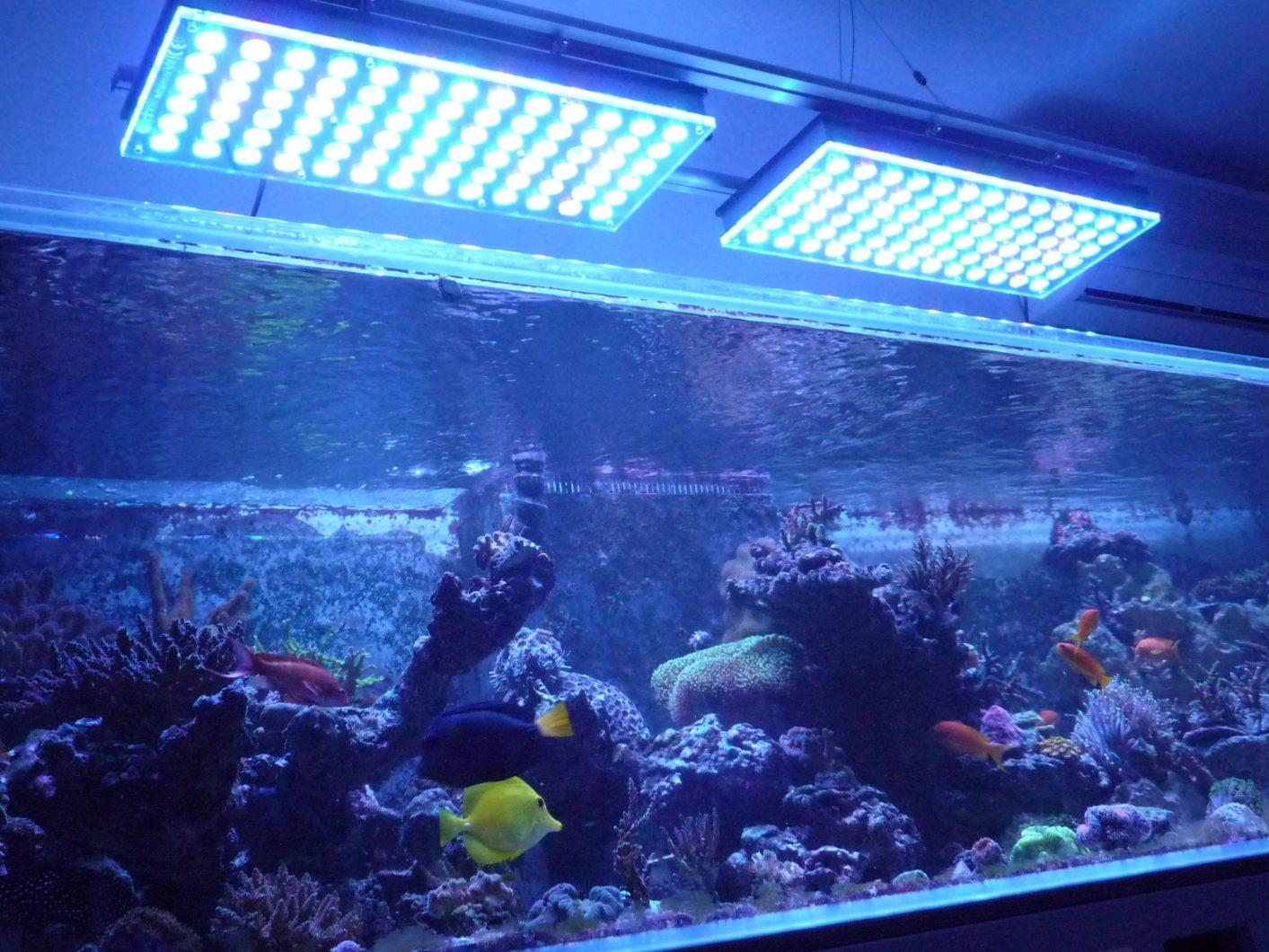 orphek_atlantik_v4_reef_aquarium_LED_lighting