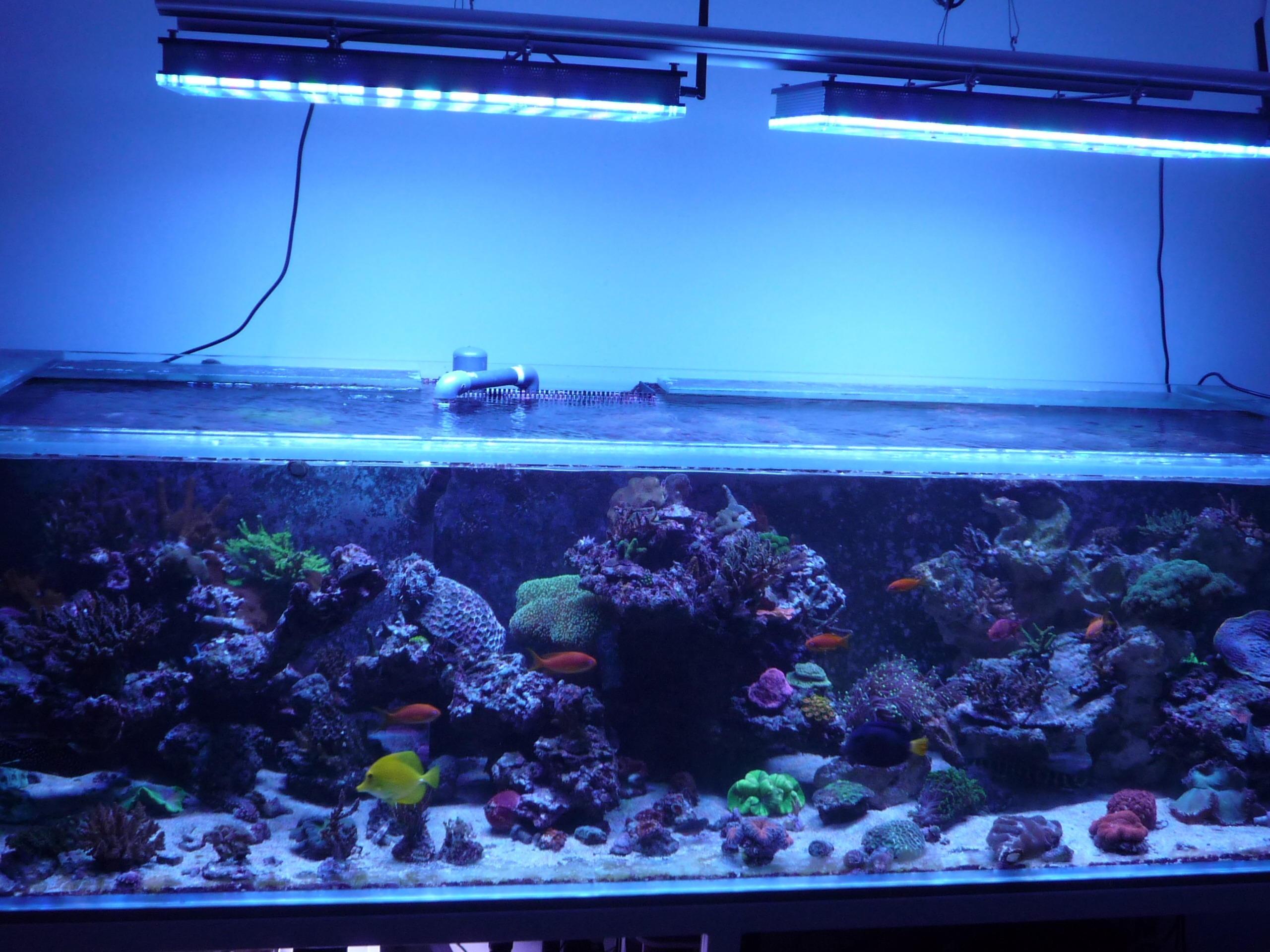 reef_aquarium_led_lighting_atlantik_v4