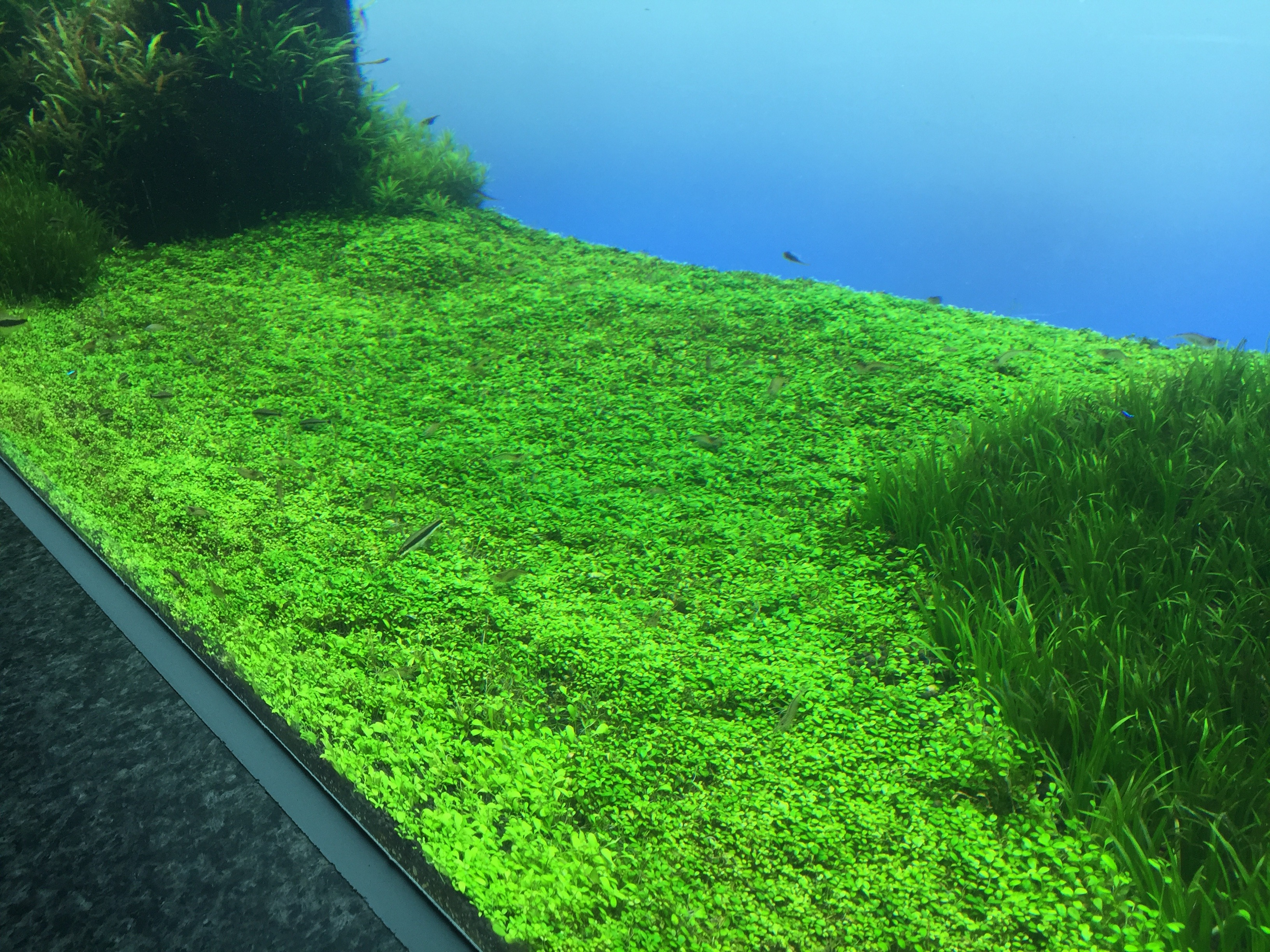 Grass matta