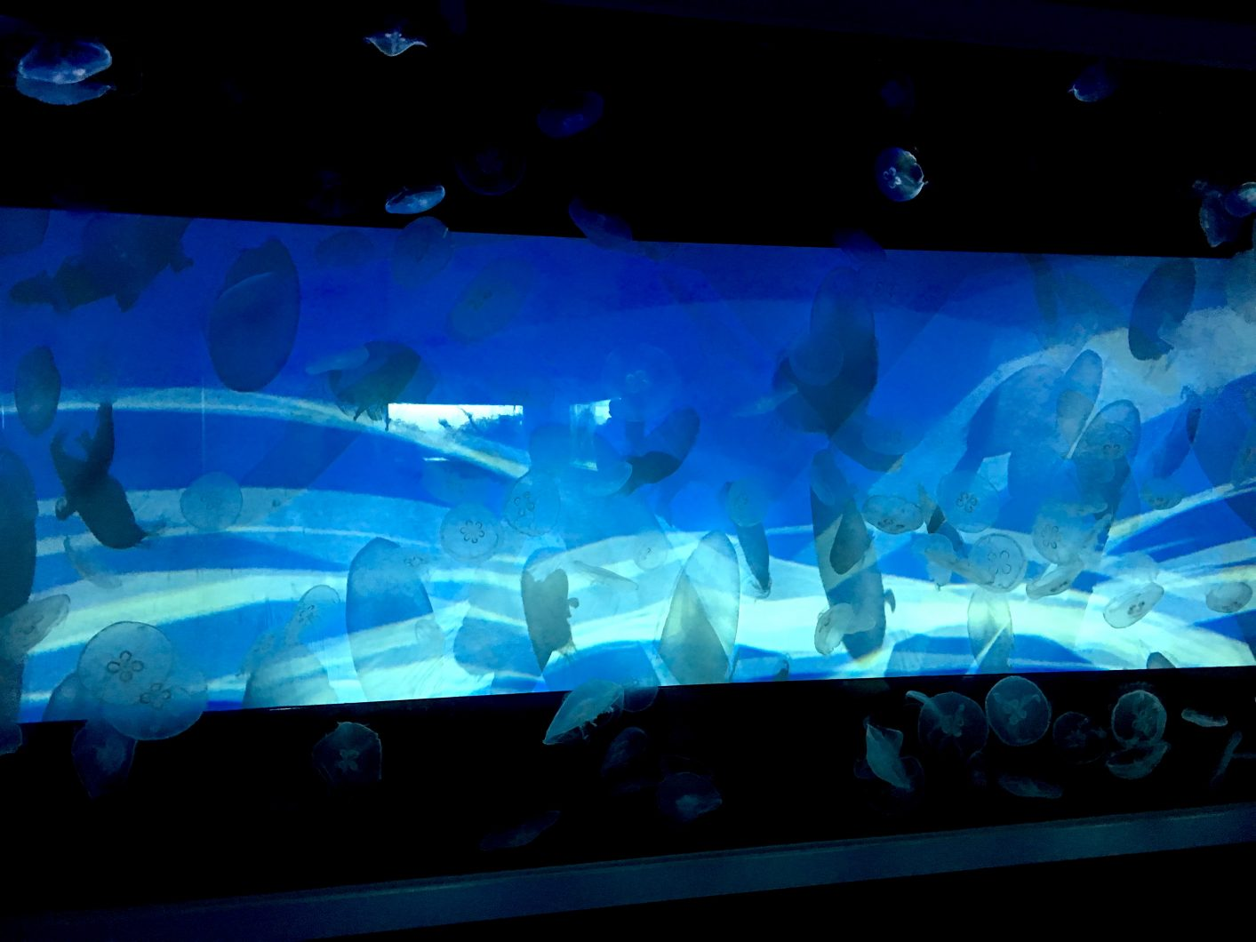 display ubur-ubur Sumida Aquarium