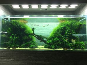 Orphek Reef Tour in Japan – Sumida Aquarium in Tokyo – Takashi Amano, part I.