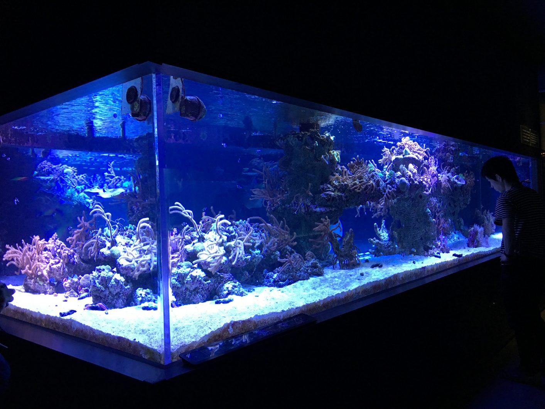 Reef Tank Sumida 1