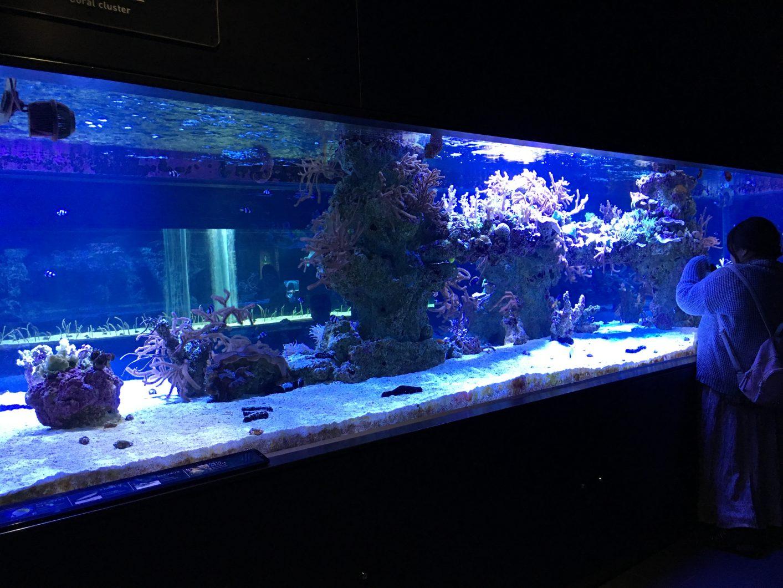 Reef Tank Sumida 2