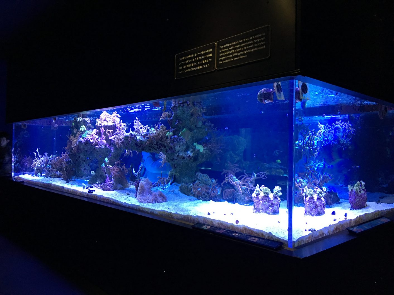 Reef Tank Sumida 3