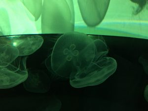Orphek Reef Tour to Japan – Sumida Aquarium in Tokyo – Jellyfish, part II.