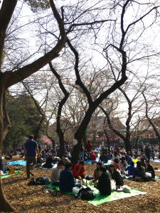 Hanami at Yoyogi Park