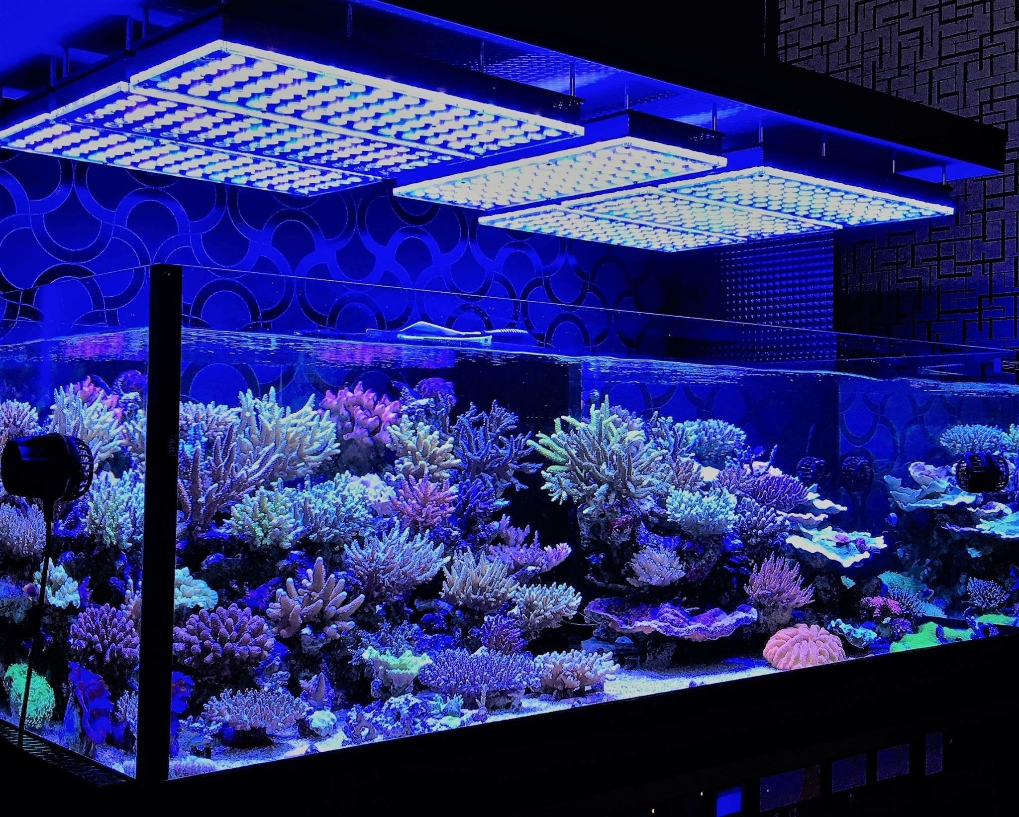 aquarium ilumination-reef corals-japan
