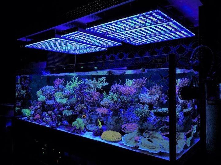 acuario a gran tanque-marine-LED-iluminación