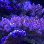 coral-se fechar
