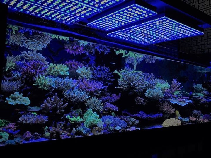 coral-growth-led-lighting