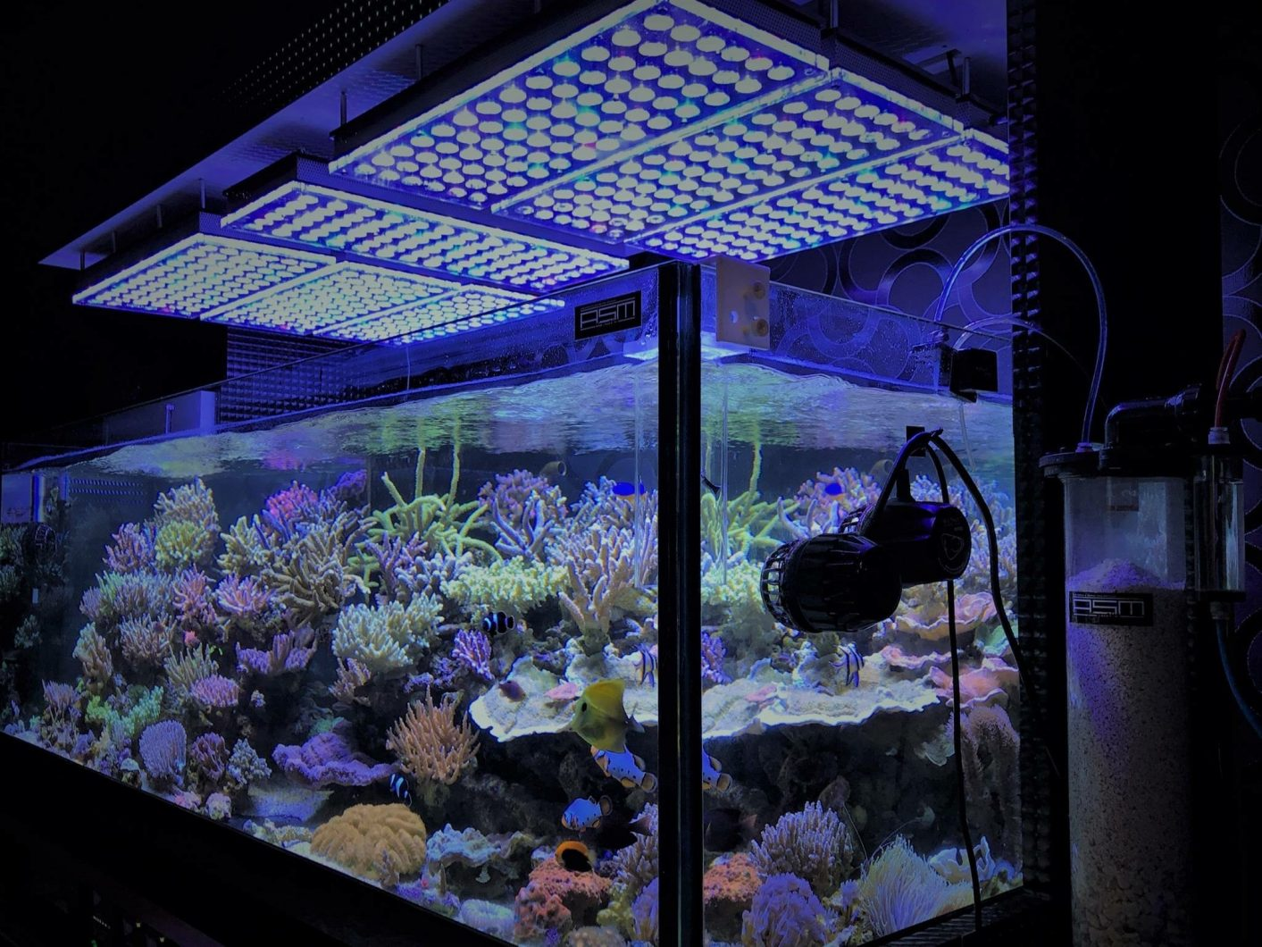 corals- LPS-SPS-sea-tank display