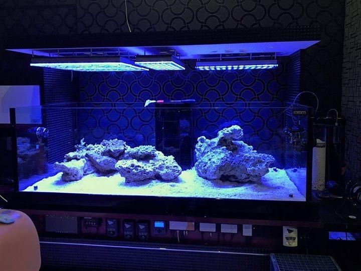 clairage led pour aquarium 2017 2018 clairage led pour aquarium orphek. Black Bedroom Furniture Sets. Home Design Ideas