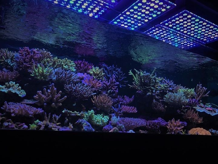 light-salt water-corals